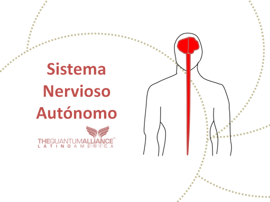 ANATOMÍA REACTIVA: SISTEMA NERVIOSO AUTÓNOMO | Trivectorworks